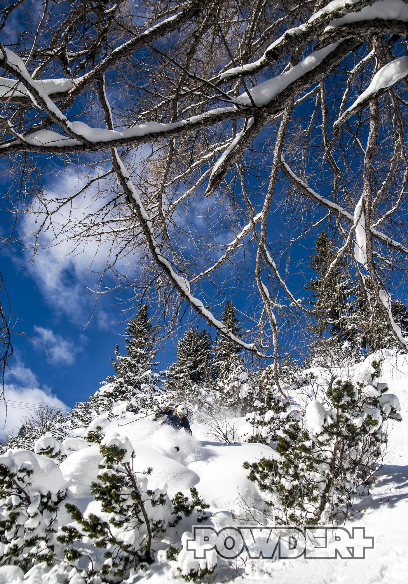 Powder, Ski Arlberg, Snowboard, Pulverschnee, Tiefschnee, freeride, Arlberg, St. Anton